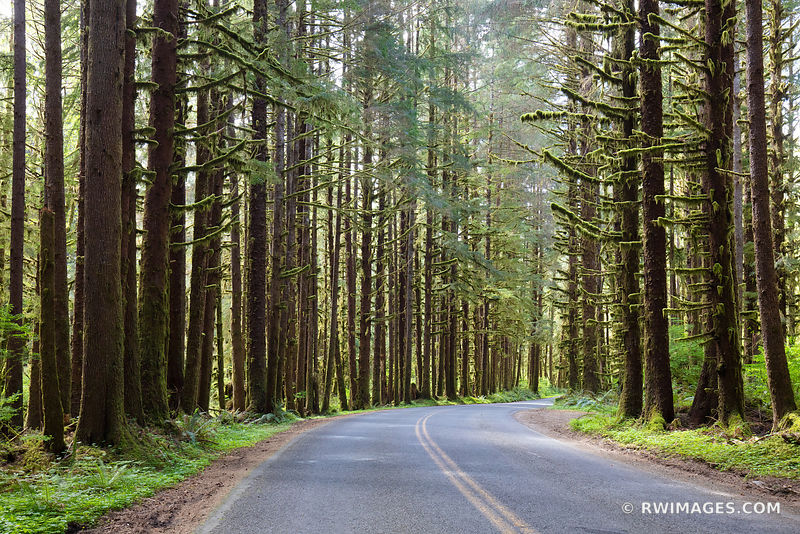 ROAD TO HOH RAINFOREST OLYMPIC NATIONAL PARK COLOR