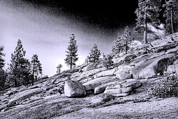 Rocks and Pines
