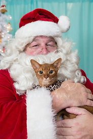 Close-up of Santa Holding Grumpy-looking Abyssinian Cat