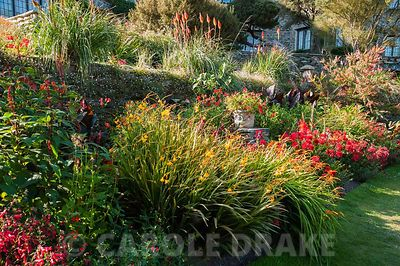 Hot border below the house bursting with colour, includes crocosmias, dahlias, gladioli, Salvia confertiflora, penstemons and red hot pokers above. Coleton Fishacre, Kingswear, Devon, UK