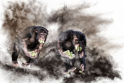 Art-Digital-Alain-Thimmesch-Animal-Divers-20