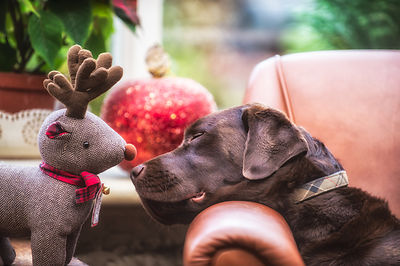 Touchy_noses_at_Xmas