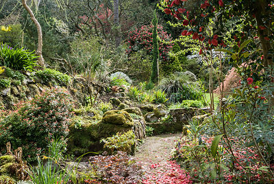 The garden around the house is shaped by paths and stonework planted with a rich mix of shrubs, trees and perennials including camellias, rhododendrons, gaultheria and astilbe. Greencombe Garden, Porlock, Somerset, UK