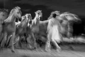 Cheval_Passion_20160123-4381