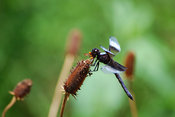 Nature Stock Photos: Dragonfly on a flower