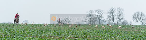 Andrew Osborne and the Cottesmore hounds near Sewstern