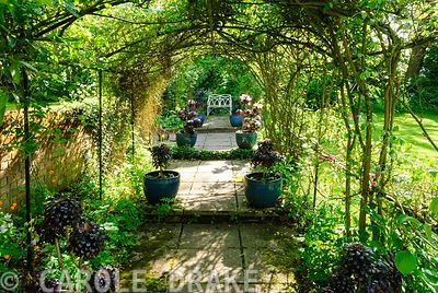 Pergola covered with roses and clematis leads to bench, framed with pots of Aeonium 'Zwartkop'. Beechenwood Farm, Odiham, Hants, UK