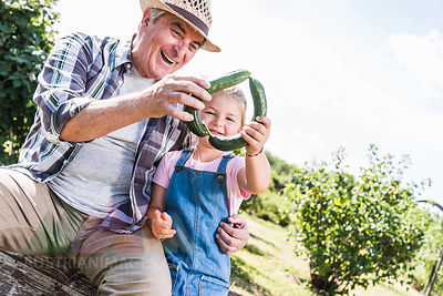 Happy grandfather and granddaughter holding cucumbers in the garden
