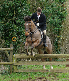 Peter Cooke jumping a hunt jump near Knossington Spinney