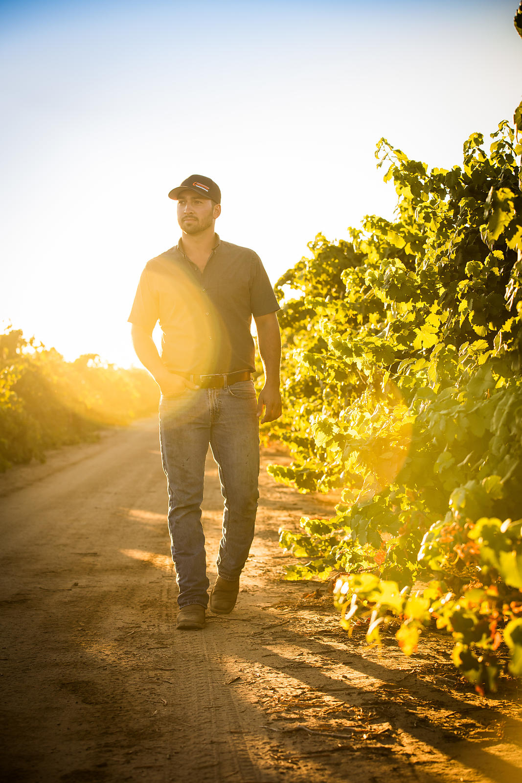 Commercial and advertising photography for wineries in Lodi by Jason Tinacci