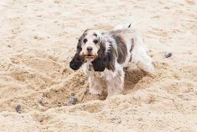 Happy dogs on the beach: Meg