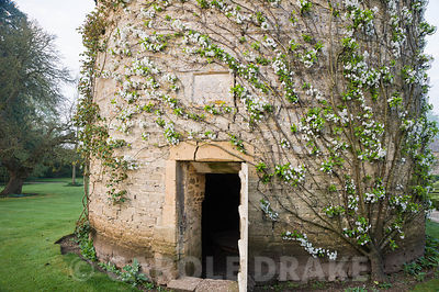 Circular pigeon house dating from 1685, with trained fruit trees curving around its wall. Rousham House, Bicester, Oxon, UK