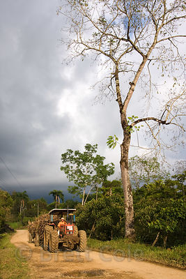 Tractor hauling sugar cane through Quizarra, Skutch Corridor, Costa Rica