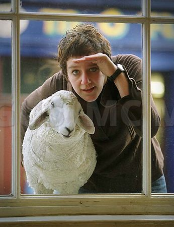 Galway_Arts_centre-sheep