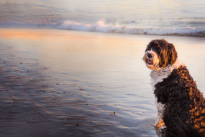 dogs on the beach photos