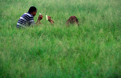 Men eat a melon in the long grass, Kathmandu, Nepal