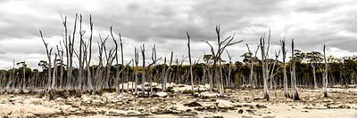 SDP-140513-lake_dumbleyung-73-HR