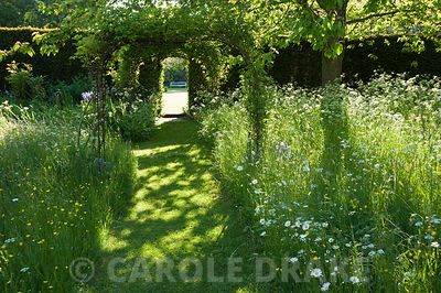 Mown grass path through the meadow full of cow parsley, buttercups, bluebells and camassias. King John's Nursery, Etchingham, East Sussex, UK