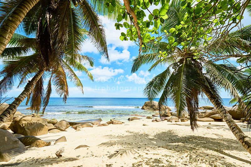 tropical beach at seychelles with coconut palm tree