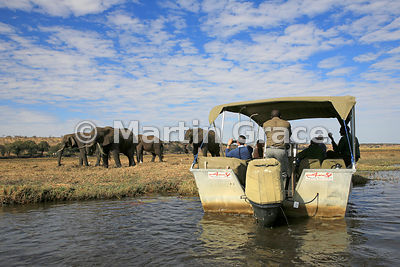 Tourists watching elephants grazing from a boat on the River Chobe, Botswana