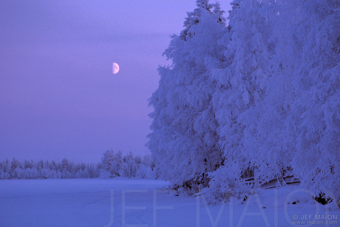 White trees and moon