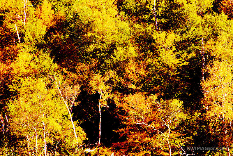 AUTUMN FOREST ADIRONDACK MOUNTAINS FALL COLORS NATURE ABSTRACT