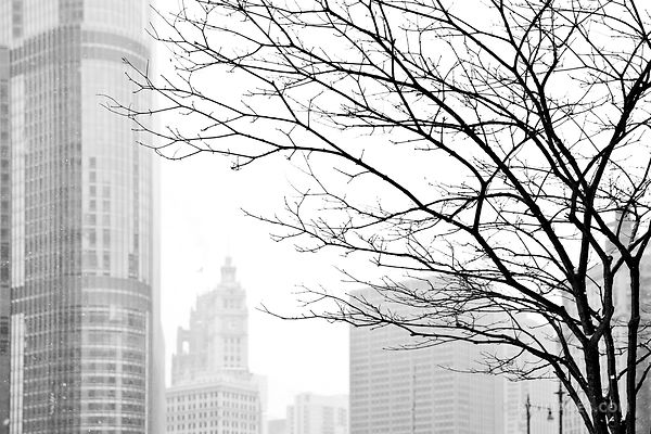 WINTER DAY HEAVY SNOWFALL CHICAGO ILLINOIS BLACK AND WHITE