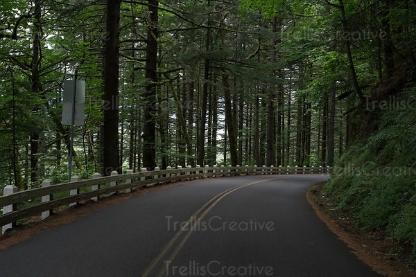 Scenic drive along a winding tree-lined road