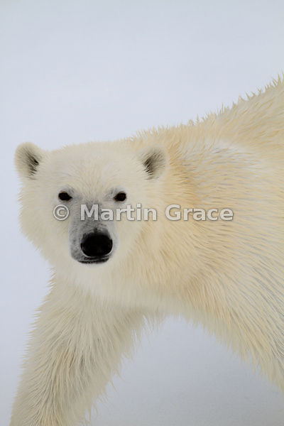 Arctic (Svalbard) photos