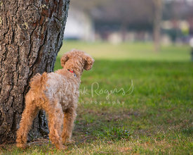 small red dog next to tree in park