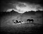Free in the wild, horse of Iceland 2015 © Laurent Baheux