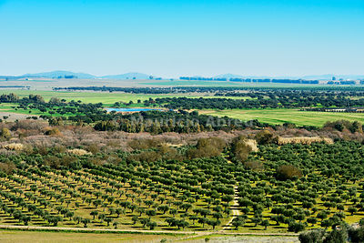 The vast plains of Alentejo and Spain with farms, olive trees and cork trees. Portugal