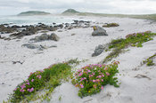 Dunes and spring flowers, West Coast National Park, Postberg Section, South Africa