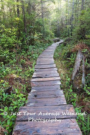 Lake Ozette Boardwalk
