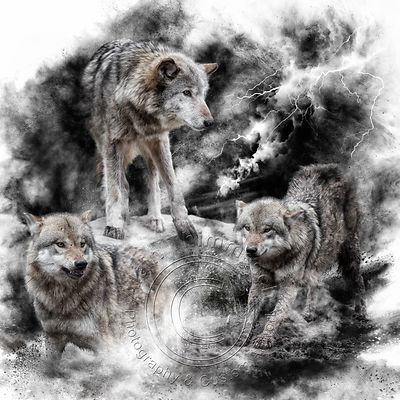 Art-Digital-Alain-Thimmesch-Loup-10