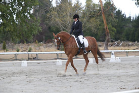 SI_Festival_of_Dressage_300115_Level_3_NCF_0104