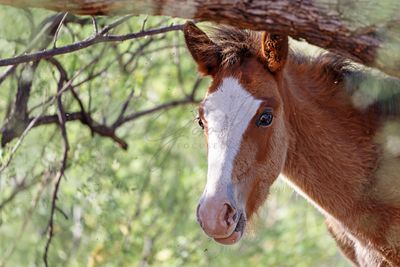 Closeup Horse Foal With Copy Space