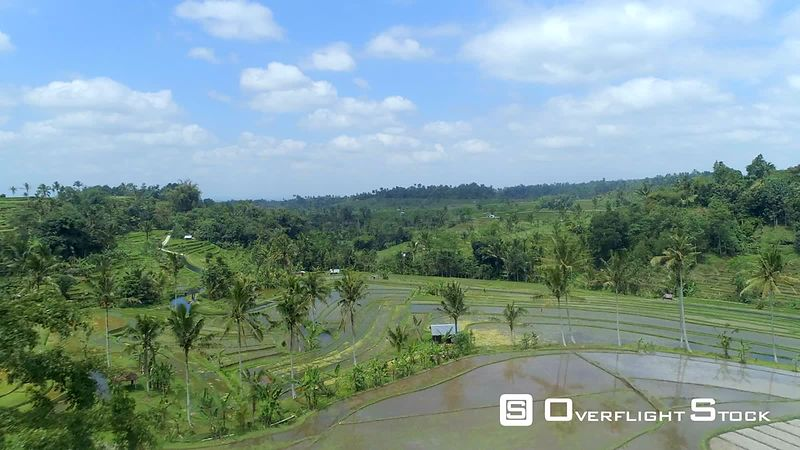 Rice Paddy on Bali Indonesia