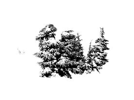 Trees on Mount Hood in pen and ink