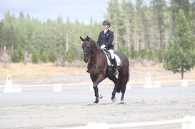SI_Festival_of_Dressage_310115_Level_1_Champ_0675