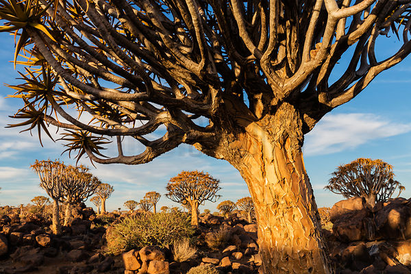 Namibia, August 2015 photos