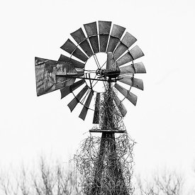 WINDMILL AND VINES