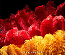 Red and yellow feathers used in Brazilian carnival fantasies