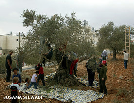 Traditional Farming in Palestine