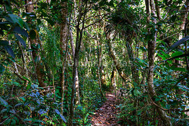 Trail in the Atlantic Forest.