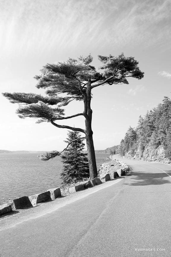 SARGEANT DRIVE ACADIA NATIONAL PARK MAINE BLACK AND WHITE