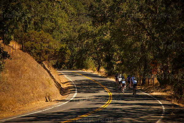 A group of cyclists riding on a winding country road in Napa Valley