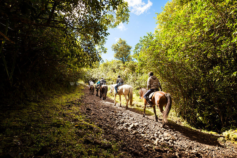Horseback ride to admire the nature of Reuion island