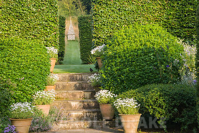 Steps decorated with pots of white daisies lead up to another part of the garden framed by mounds of Choisya ternata. Through two sets of beech hedges a simple flint obelisk forms a focal point set in a grassy meadow. Corscombe House, Corscombe, Dorset, UK