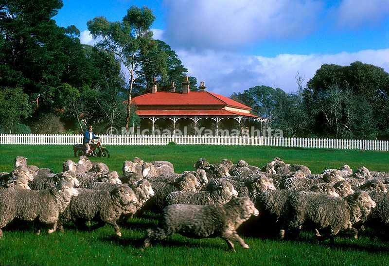 Glenisla sheep station, Victoria Australia